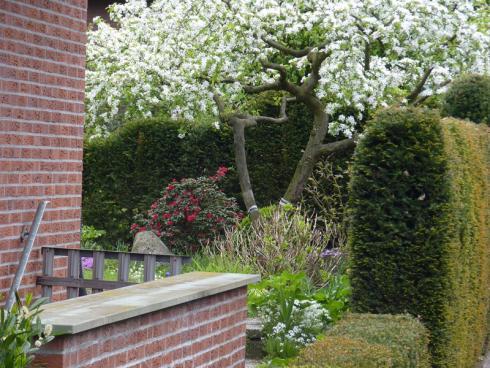 Bild BGL: Selbst dezente Blüten in hellen Farben rücken vor einem dunkelgrünen Hintergrund sofort ins Zentrum der Aufmerksamkeit.