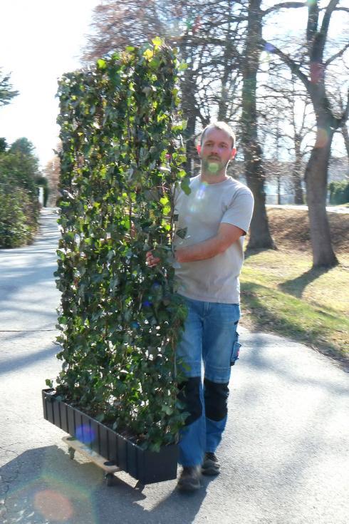 Bild Helix: Auch in der kalten Jahreszeit kann die 'Hecke am laufenden Meter' gepflanzt werden. Einiges spricht sogar dafür, den Zeitraum zwischen Oktober und März zu nutzen.