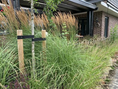 Bild elegrass: Für ein paar Monate im Jahr können hochwachsende Gräser einen filigranen Sichtschutz bieten, der sich sanft im Wind wiegt.