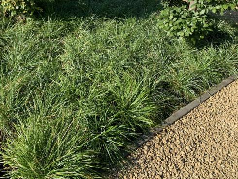 Bild elegrass: Als Botendecker sind viele Gräser ideal: Sie sind äuflerst genügsam, pflegeleicht und lassen Unkräutern kaum Platz sich auszubreiten. Mit ihnen sieht jede Fläche attraktiv und lebendig aus.