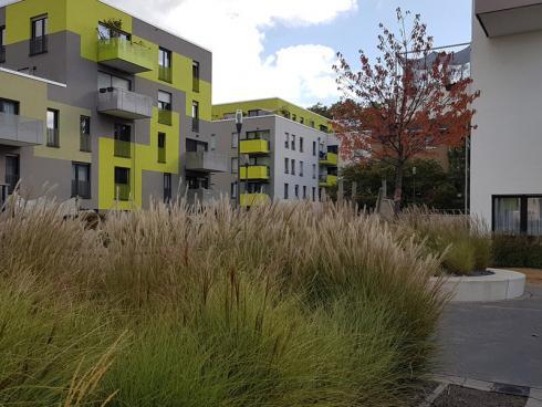 Bild elegrass: Die Freiflächen in Neubaugebieten müssen viele Funktionen erfüllen: Hier brechen sie auf attraktive Art und Weise die harten Linien der Architektur. Je nach Licht, Wetter und Wind verändert sich das Erscheinungsbild.
