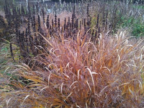 Bild elegrass: Aufgeräumt war gestern! Gräser und Stauden bitte im Herbst nicht abschneiden, sondern als Nahrungsquelle für Vögel und Insekten den Winter über stehen lassen.