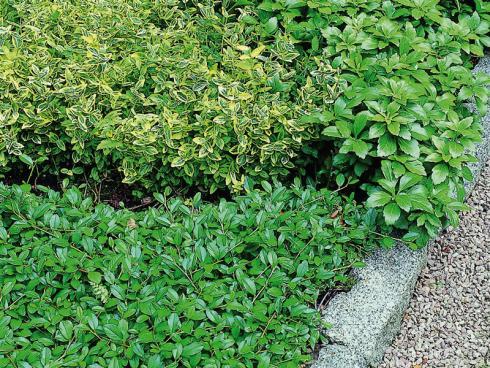 Foto: Helix. - Eine dichte Vegetationsschicht hat viele Vorteile: Sie beschattet den Boden und verhindert dadurch ein schnelles Austrocken, fördert das Leben von Nützlingen im Erdreich und macht es Unkräutern schwer, Fuss zu fassen.