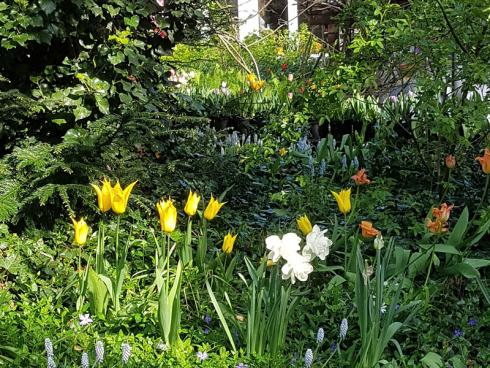 """Bild BGL: """"Der Frühling übt einen besonderen Zauber auf uns Menschen aus. Daher wünschen sich viele unserer Kunden explizit eine Vielfalt an Frühlingsblühern, die dem Garten schon früh fröhliche Farbtupfer verleihen und den Startschuss geben für ein blütenreiches Jahr"""", sagt Landschaftsgärtner Max Hohenschläger vom BGL."""