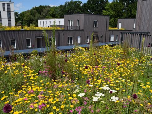 Foto: BuGG. - Mit einer Dach- und Fassadenbegrünung kann ggf. mehr Grünfläche entstehen, als durch den Bau des Gebäudes verbraucht wurde.