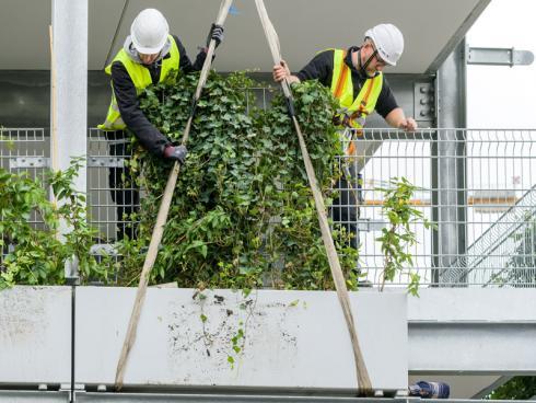 Bild Stefan Schilling/Helix: Für das Kölner Projekt wurde das System 'Elata' vom schwäbischen Unternehmen Helix Pflanzensysteme modifiziert und an die Gegebenheiten und Anforderungen vor Ort angepasst.