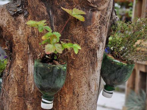 Bild garten.ch: Upcycling von Pet-Flaschen mit Erdbeerkultur