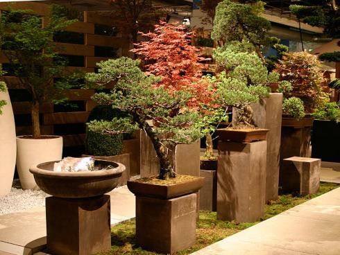 Bild garten.ch: Formgehölze und Bonsai sind attraktiv. Sie erfodern allerdings ein wachsames Gärtnerauge in Pflege und Unterhalt.