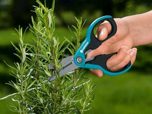 Am besten geht die Kräuterernte mit einer Schere von der Hand. Man schneidet immer ganze Triebspitzen ab, damit der Rosmarin zu neuem Wachstum angeregt wird.