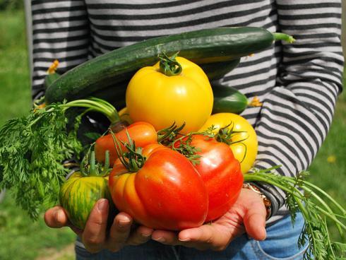 Bild 1: Dicke Tomaten, Paprika, Gurken und Co. sind kein Hexenwerk, wenn man ein paar richtige Werkzeuge und Verhaltensweisen berücksichtigt