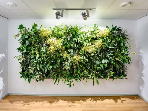 Bild GMH: Üppiges Wachstum an der Wand: Vertikalen Begrünung wird in Geschäftsräumen immer häufiger als attraktives Gestaltungselement eingesetzt, das zudem das Raumklima verbessert.