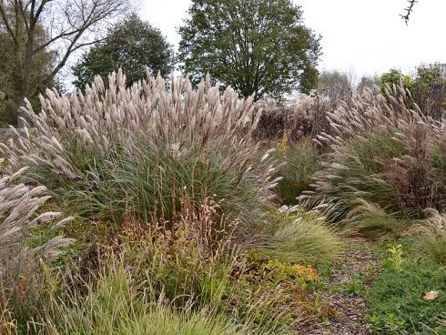 Saisonausklang: Zartes Federgras (Stipa tenuissima) umschmeichelt die imposanten, den Garten auch im Winter prägenden Horste des Chinaschilfs (Miscanthus). (Bildnachweis: GMH/Anne Eskuche)