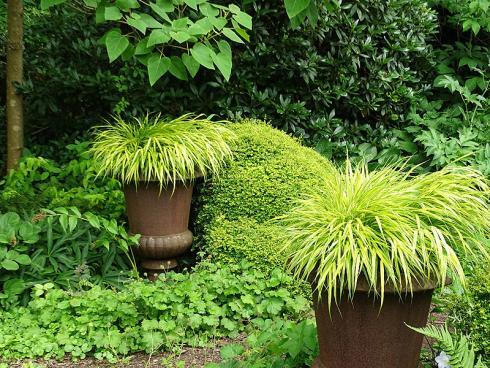 Topf mit Schopf: Goldgrün leuchten die Halme des Japangras 'Aureola' (Hakonechloa macra) dem Betrachter entgegen. Im Herbst nimmt das dekorative Gras eine rotbraune Färbung an. (Bildnachweis: GMH/Bettina Banse)