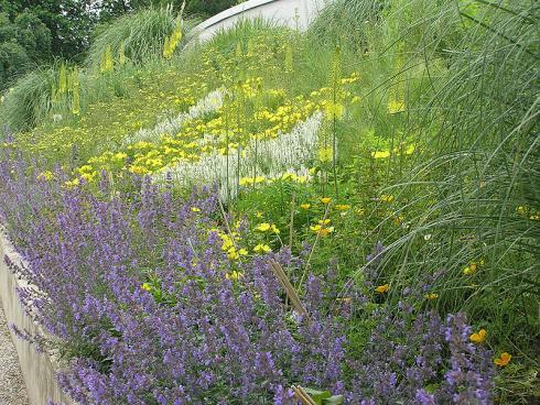 Sonnenaufgang: Chinaschilf (Miscanthus) rahmt das wogende Gold aus Nachtkerzen (Oenothera), Kalifornischem Mohn (Eschscholzia californica) und hoch aufragenden Steppenkerzen (Eremurus) ein. Dazwischen blitzen weißer Steppen-Salbei (Salvia nemorosa) und violettblaue Katzenminze (Nepeta x faassenii) auf. (Bildnachweis: GMH/Annette Urbanietz)