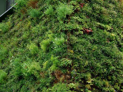 Hängende Gärten: Bei sogenannten Living Walls wachsen die Pflanzen in Modulsystemen mit integrierter Bewässerung und Düngung direkt an der Hauswand – mehr Gefälle geht nicht! (Bildnachweis: GMH/Bettina Banse)