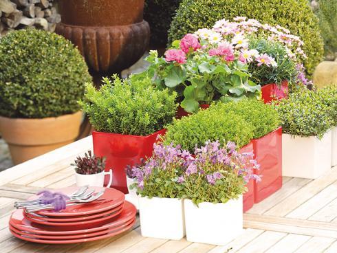 Bild GMH/Gartenbau Hetjens: Als stilvolle Tischdekoration sind Strauchveronika ebenfalls hervorragend geeignet – zum Beispiel in Kombination mit Geranien (Pelargonium) oder Glockenblumen (Campanula).