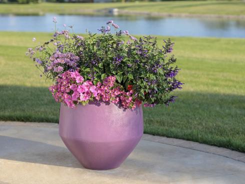 Auch im Kleinen können Blumenfreunde die Bienen erfreuen. Ziersalbei passt auf jeden Tisch und erfreut Betrachter und Insekten gleichermaßen mit seinen leuchtenden Farben. (Bildnachweis: GMH/Kientzler)