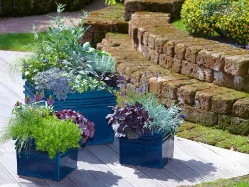 Bild GMH/FGJ: Die Gruppe Kübel in Blau unterstreicht die Bepflanzung aus blau-violetten Blüten und silbrigen Kräutern. Schöne Akzente setzen dunkle und frischgrüne Blattschmuckpflanzen. Pflanzenliste am Ende des Artikels.