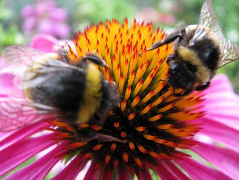 Bild garten.ch: Mit Stauden lässt sich ein ideales Umfeld für Insekten gestalten.