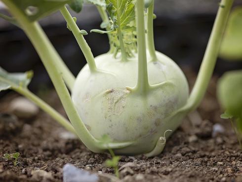 Bild 2: Das Geheimnis guten Pflanzenwachstums: Ein lockerer Boden, der Wasser gut durchlässt und Wurzelwachstum erlaubt.