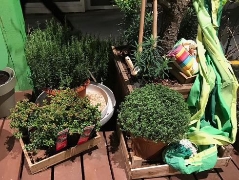 Bild garten.ch: Kräuter und Stauden als Unterpflanzung bei Obst