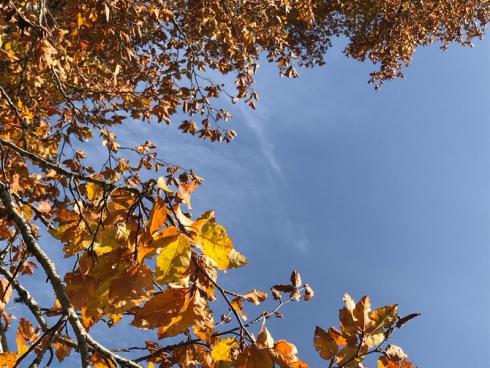 Bild garten.ch: Nach ersten starken Frösten, kommt das Laub von den Bäumen runter.