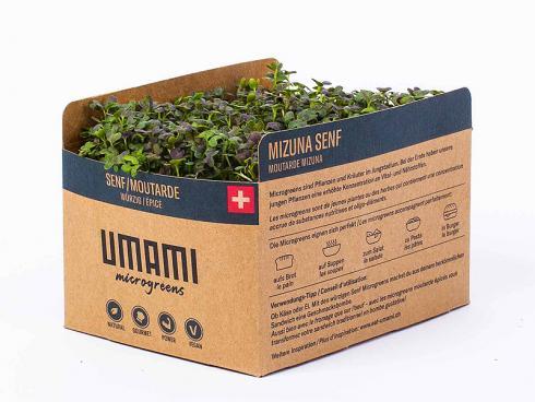 Bild UMAMI AG S. Bain: Microgreen Mizuna Senf auf Hanfmatte