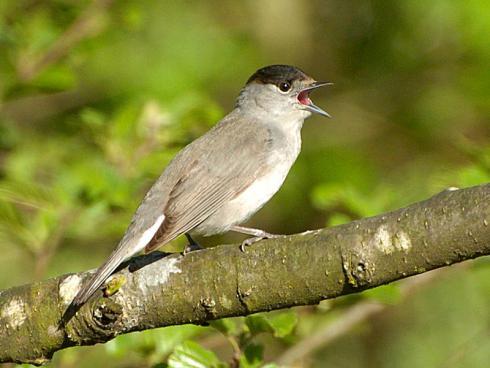 Bild: BirdLife Schweiz, Michael Gerber