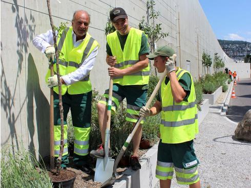 Bild Grün Stadt Zürich: Stadtrat Filippo Leutenegger packt beim Pflanzen eines Aprikosenbäumchens mit an.