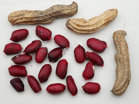 Bild Lubera GmbH: (Not) Just Peanuts® Justmore® - die neue Erdnussserie von Lubera®