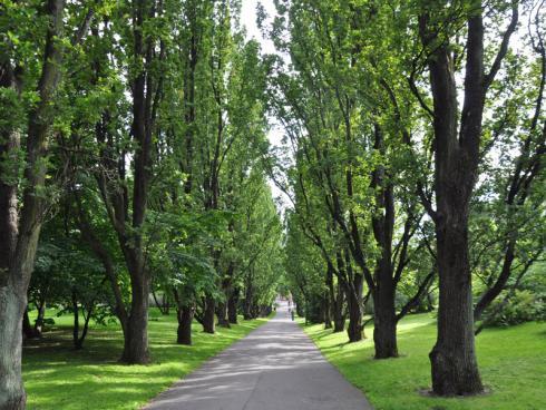 Bild garten.ch: Grosse Bäume senken das subjektive Lärmempfinden.