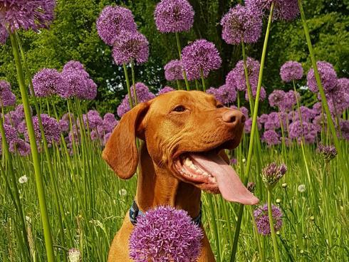 Photo by Liesbeth Koopmans from Pexels: Hunde sind lernfähig und man kann ihnen beibringen, wo sie sich im Garten aufhalten dürfen.