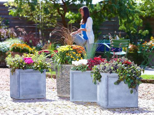 Bild GMH/FGJ: Mit warmen Gelb- und Rottönen zieht der Herbst auf Terrassen und in Gärten ein. In liebevoll arrangierten Pflanzkübeln setzen Herbstblüher mit ihren Begleitpflanzen bezaubernde Akzente.