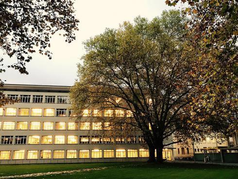 Bild garten.ch: Sanierte Platanen vor Schulhaus