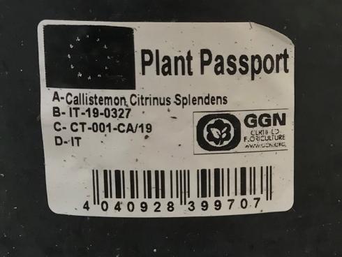 Bild BWL: Pflanzenpass auf dem Topf der Callistemon-Pflanze