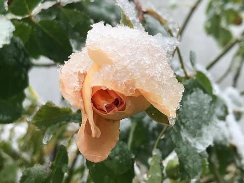 Bild garten.ch: Wenn Schnee und Frost Einzug hält, ist es Zeit die Aussenhähnen zu entleeren, sofern sie nicht frostsicher sind.