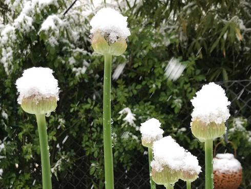 Bild garten.ch: Ein Blick aus dem Wintergarten in den Garten im frühen Frühling bei Schnee.