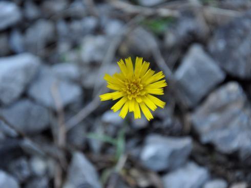 Bild garten.ch: Die Natur schlägt zurück, unermüdlich und besiedelt die kahlen Flächen wieder.