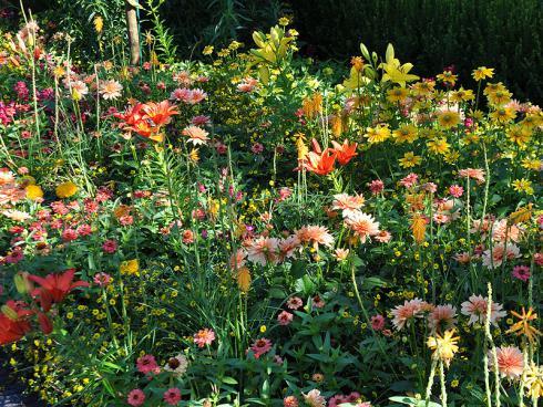 Bild garten.ch: Sommerblumen Mischung Zinien, Lilien, Kniphofien, Dahlien