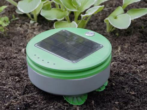 Bild Franklin Robotics: Tertill solarbetriebener Jätroboter Unkrautsensor und Hacker, geeignet für Gemüse und Blumenbeete.