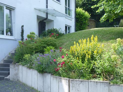 Bild BGL: Eine repräsentative Marktforschung der GfK ergab, dass die meisten Grundstücksbesitzer grüne Vorgärten schön finden - ganz unabhängig davon, ob vor ihrem Haus Pflanzen wachsen oder Steine liegen.