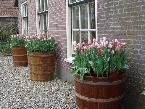 Foto: fluwel.de. - Manchmal sind es auch grosse bepflanzte Gefässe, die einem Haus sein Gesicht verleihen.