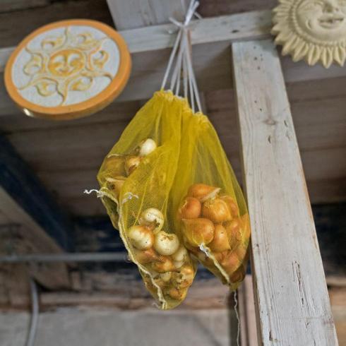 Bild fluwel.de: Lagerung der Tulpenzwiebeln warm und trocken