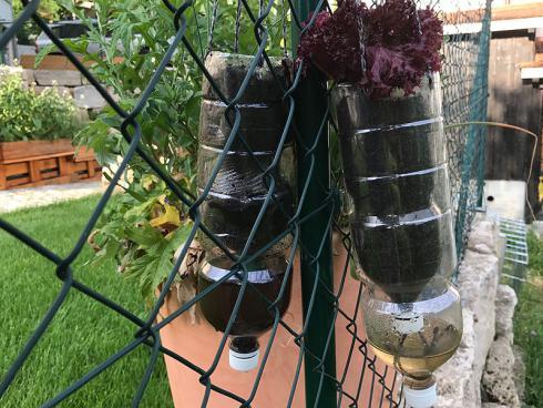 Bild garten.ch: Vertikaler Gemüsegarten mit Bewässerungssystem