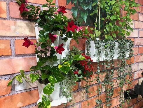 Bild garten.ch: Im Zuge der Erwärmung der Innenstädte steigt das Bewusstsein, dass Pflanzen eine positiven Einfluss auf das Klima haben. Mit der Begrünung von Wänden eröffnet sich ein neues Potenzial.