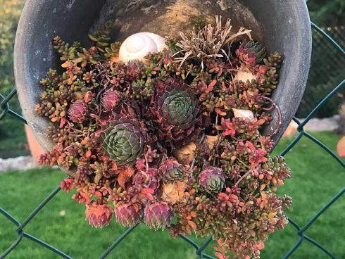 Bild garten.ch: Nano Garten mit Hauswurz, Gras und Sedum