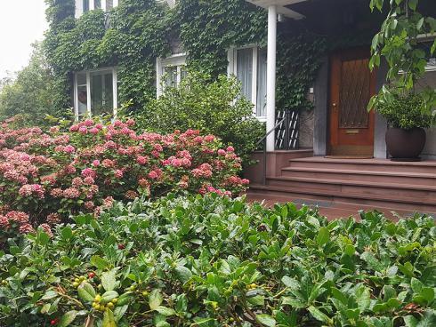Bild BGL: Bepflanzter Vorgarten klimawirksam, Reduktion der Hitze, Wasseraufnahme und kontinueriliche Abgabe.