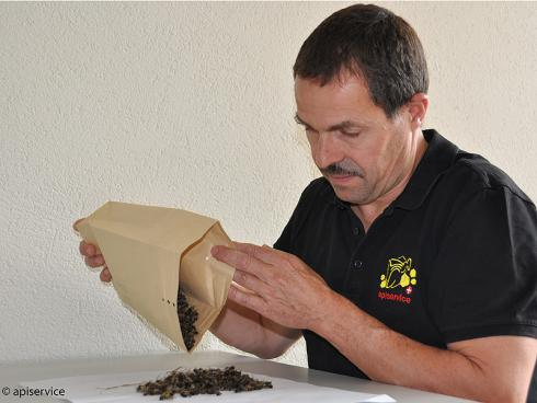 Bild apiservice: Bienenprobe zur Voruntersuchung