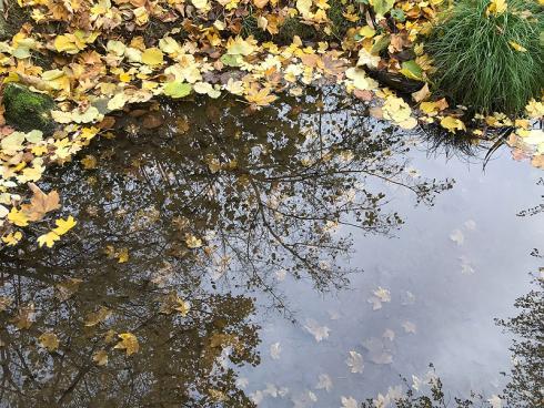 Bild garten.ch: Gartenbaden dient dem Wohlbefinden. Die Betrachtung der Natur, des Wassers, der Bäume und Pflanzen hat einen wohltuenden Einfluss auf den menschlichen Organismus.