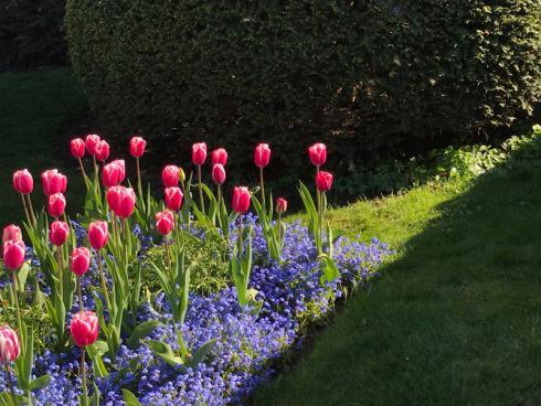Bild garten.ch: Frühlingsflor von Rasen und Hecke umgeben.